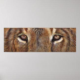 Lion Eyes Art Poster