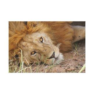 Lion eyes canvas prints