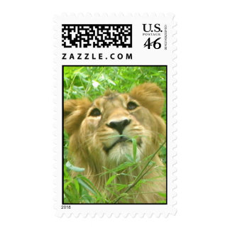 lion face 1 stamp