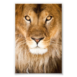Lion Face Closeup Art Photo