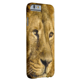 Lion Face Head Wildlife Cat Animal Case
