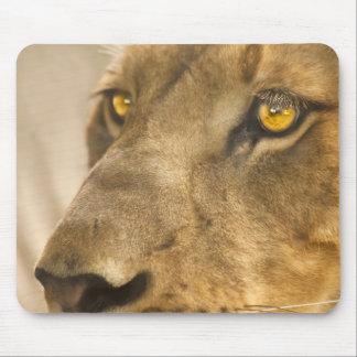 Lion Face Mousepad