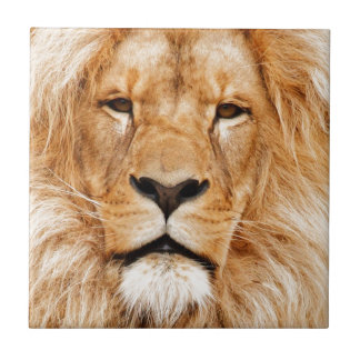 Lion Face Photograph Ceramic Tile
