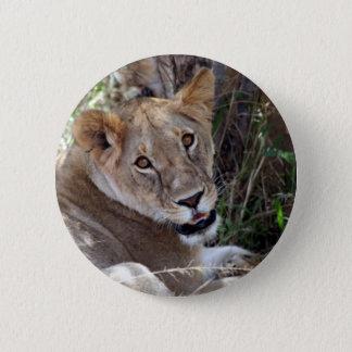 lion face pinback button