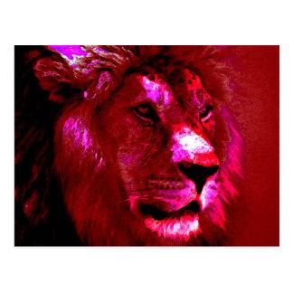 Lion Face Postcards