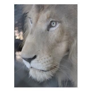 Lion Face Postcard