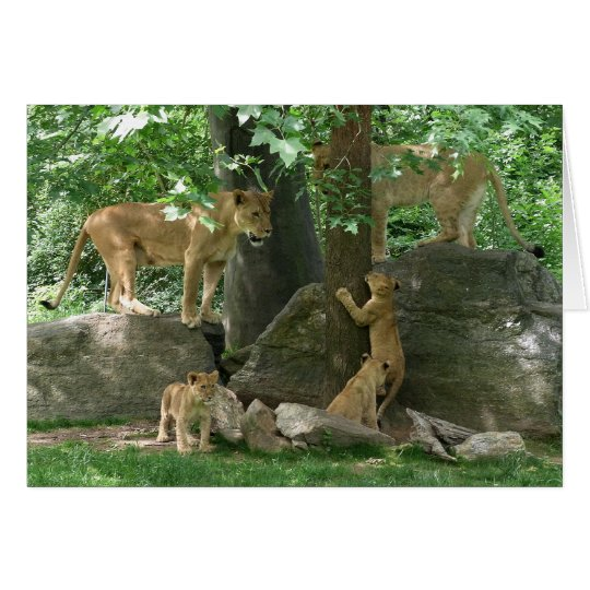 Lion Family at Play card