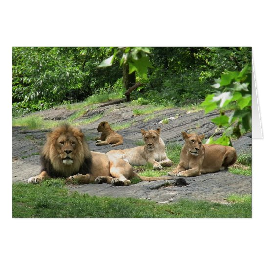 Lion Family at Rest card