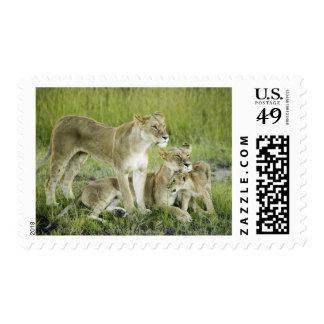 Lion family in Kenya, Africa Postage