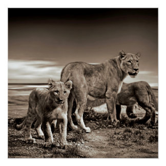 Lion Family Poster