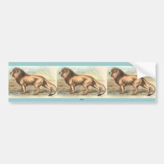 Lion, Felis leo Car Bumper Sticker