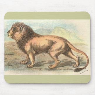 Lion, Felis leo Mouse Pad