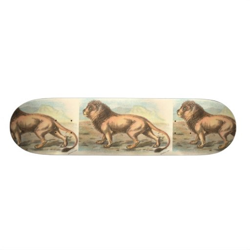Lion, Felis leo Skate Board
