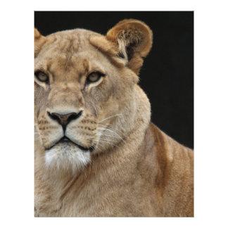 Lion Female Lying Down Letterhead