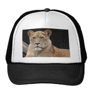 Lion Female Lying Down Trucker Hat
