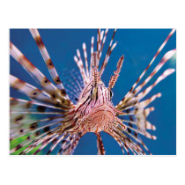 Lion Fish Looking at You Postcard