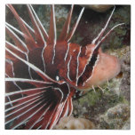 Lion Fish Tile