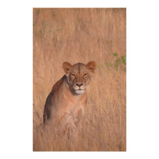 Lion Flyer Design