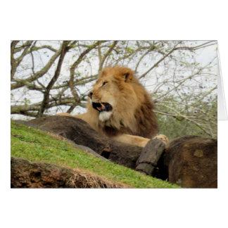 Lion Greeting Card (0356)