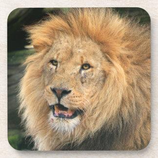 Lion head male beauitful photo coaster