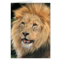 Lion head male beautiful photo blank note card