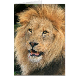 Lion head male beautiful photo blank note card