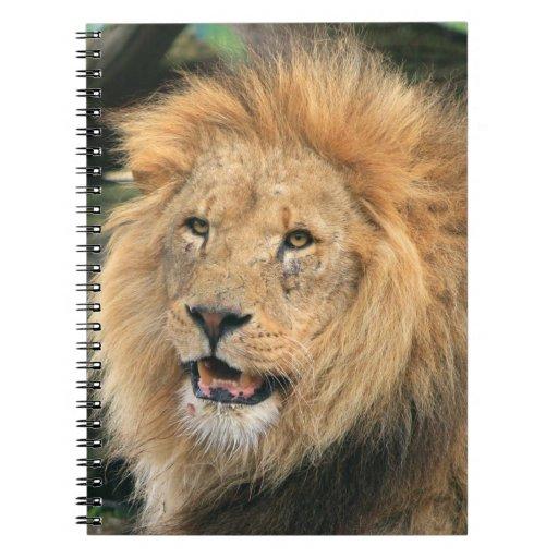 Lion head male beautiful photo notebook