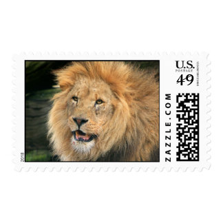 lion head male beautiful photo postage stamp
