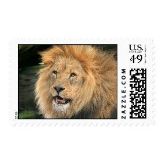 lion head male beautiful photo postage stamp