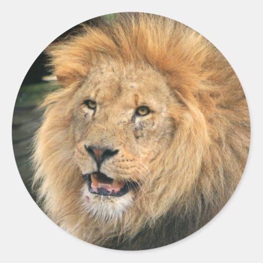 Lion head male beautiful photo sticker, stickers