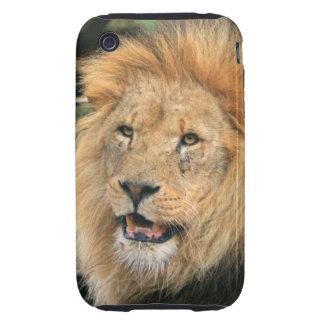 Lion head male handsome iphone 3G case mate tough