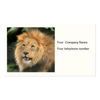 Lion head male handsome photo custom business card