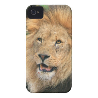 Lion head male photo iphone 4 case mate barely