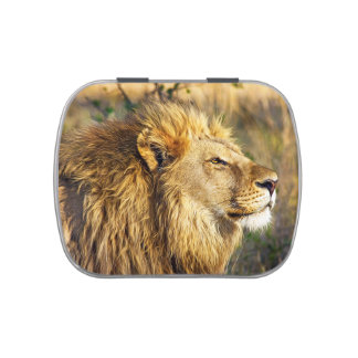 Lion Head Wildcat African Wildlife Animal Jelly Belly Tins