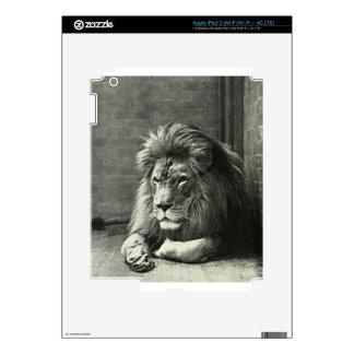 Lion Illustration iPad 3 Skins