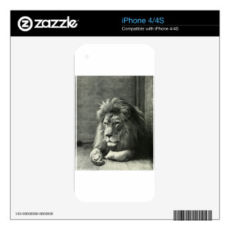 Lion Illustration iPhone 4 Decals