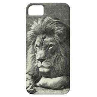 Lion Illustration iPhone SE/5/5s Case