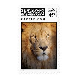 Lion Image Postage Stamp