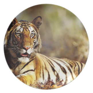 Lion Image Print Plate