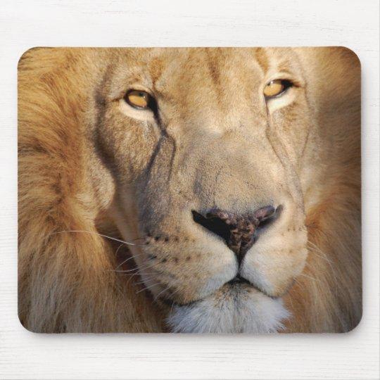 Lion Images Mouse Pad