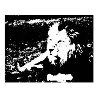 Lion in Black and White Postcard