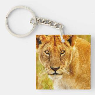 Lion in Field Keychain