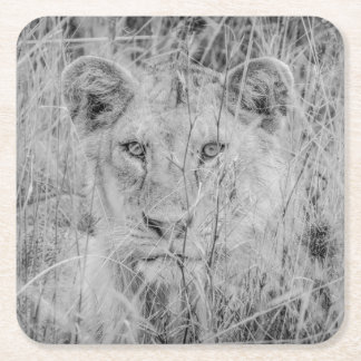 Lion in Grass Paper Coaster Square Paper Coaster