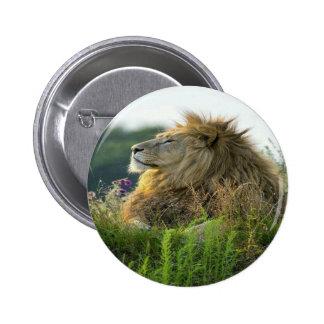 Lion in Grass Pinback Button