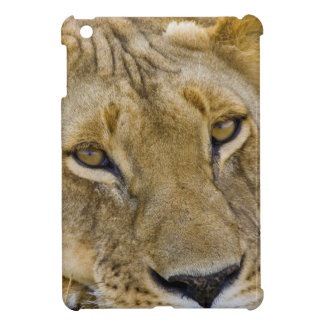 Lion in the brush, resting in the heat of the case for the iPad mini