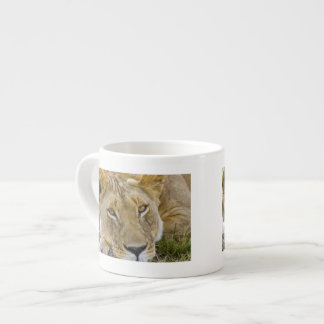 Lion in the brush, resting in the heat of the espresso cup