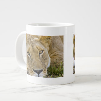 Lion in the brush, resting in the heat of the giant coffee mug