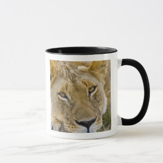 Lion in the brush, resting in the heat of the mug