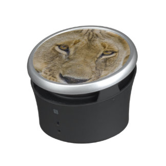 Lion in the brush, resting in the heat of the speaker