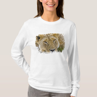 Lion in the brush, resting in the heat of the T-Shirt